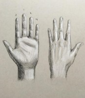 Drawing and Rendering the Hands in Charcoal