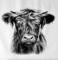 Highland Calf Drawing in Charcoal (Easter School Holiday Workshops)