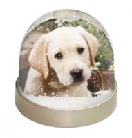 Paint cute animals in Snow Globes