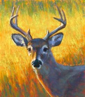 Deer in Pastel (FULL)